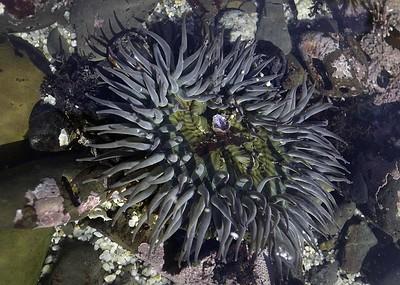 fitzgerald marine life 2014